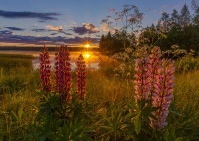 Sonnenaufgang in Finnland